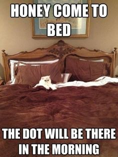Come to bed, honey  // funny pictures - funny photos - funny images - funny pics - funny quotes - #lol #humor #funnypictures