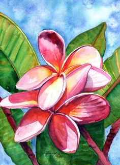 Playful Plumeria Watercolor Painting Original from Kauai Hawaii orange hot pink magenta