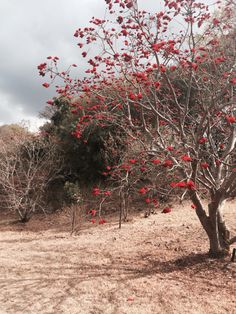Red Grey.  Tree. Nature.