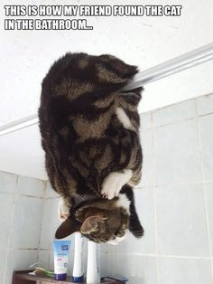 18 TIME CATS WERE ADORABLE IDIOTS