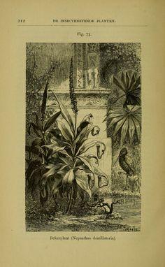 De voeding der planten / - Biodiversity Heritage Library