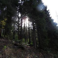 Good morning #good #goodmorning  #morning  #wood  #naturelovers  #nature #photography #nature #forest  #dokresluje #natureshot