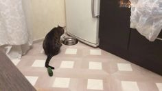 funny cats - Cats scared of Cucumbers Compilation - Cats Vs Cucumbers - Funny Cats 2017