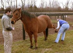 A physical therapy program for horses with stifle problems