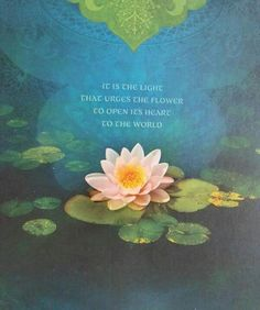 """It is the light that urges the flower to open its heart to the world."""
