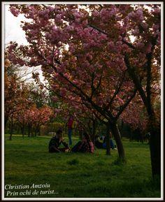 Povesti din Bucuresti – Gradina Japoneza / Stories of Bucharest – The Japanese Garden. Capital Of Romania, Bucharest, Japanese, Explore, Garden, Plants, Park, Garten, Japanese Language