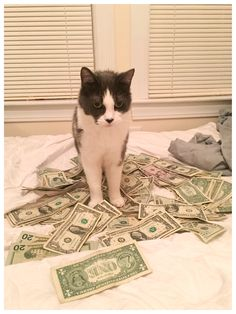Good guy Tigh money cat