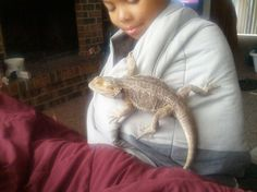 Our babies Bearded Dragon, Our Baby, My Love, Animals, Babies, Animales, Babys, Animaux, Animal