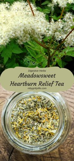 Digestive Herbs: Soothing Meadowsweet & Heartburn Relief Tea