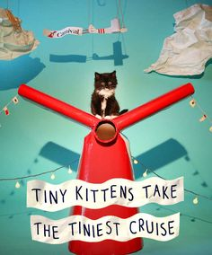 Tiny Kittens Take The Tiniest Cruise