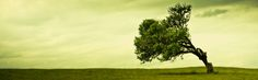 awesome tree HD Wallpapers, Wallpapers For Desktop, Android, Iphone,nature wallpapers,anime wallpapers,car wallpapers