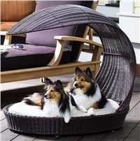 outdoor dog, doggi board, dog chais