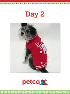 Here is today's 12 Days of Pinterest featured image (12/4/2012). Pin this Moose Sweater image to one of your boards for a chance to win a 500 dollar Petco shopping spree, plus 500 dollar Petco Gift Card for a Petco Foundation shelter/rescue of your choice. Winner will be announced tomorrow (12/5/2012) between 12pm and 5pm Pacific Time.