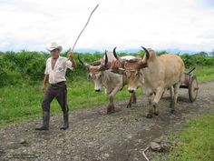This is the real oxcart of Costa Rica, used in the country from the mid-nineteen century.   Today some farmers still use them to transport different products.