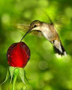✨ Reciprocidade ❝ É isso que faz as coisas darem certo... Na atenção, no carinho, na amizade, no amor.❞  ♡ Beija-Flor ✨⁀⋱‿.✨☮♡.‿.