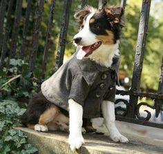 Dog wearing pea coat.