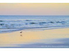 Search Rentals - First Choice VBR Beach Vacation Spots, Florida Vacation, Start Of Winter, Enjoy Your Vacation, Deep Sea Fishing, Daytona Beach, Aerial View, Surfing, Ocean