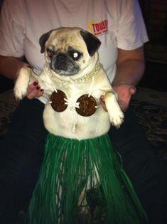 Pugs in costumes Pug Halloween Costumes, Pugs In Costume, Dog Costumes, Costume Ideas, Amor Pug, Puppies And Kitties, Pug Puppies, Doggies, Cute Pugs