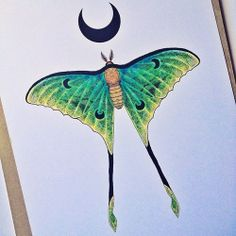 la mariposa extraña
