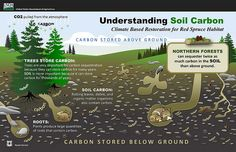 Understanding soil carbon by United States Department of Agriculture
