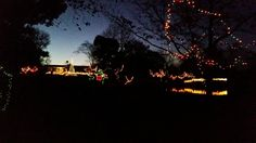 Every year for the past decade, we have gone to see the lights at the Memphis Zoo the night after Thanksgiving. This is one of our many tra. Memphis Zoo, Zoo Lights, Blessings, The Past, Blessed, Thanksgiving, Thankful, Traditional, Sunset