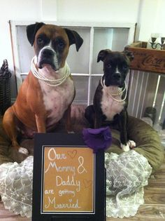 This is the picture I took of our two Boxer girls, Mia & Jovie to place at our Welcome Table at our Plantation wedding in South Carolina!