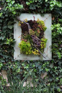 Searoon florist succulents