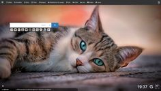 Cats are one of the most numerous pets in the community. The cuteness of the cat and its adorable style make the community choose cats as th. Cute Kittens, Cute Kitten Gif, Cat Gif, Cute Cat Wallpaper, Hd Wallpaper, Computer Wallpaper, Cat Pose, Sandro, Dog Cat