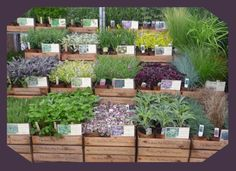 Google Image Result for http://www.hairypotplants.co.uk/ekmps/shops/kirtonfarm/resources/Design/wooden-1litre-tray-display.jpg