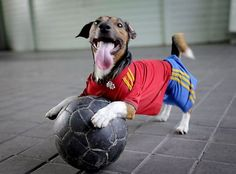 All the way from Bark-alona this football playing pup roots for Spain in the Euro 2012 tournament.
