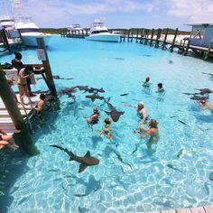 This is the Bahamas. It is so nice in the Bahamas and the ocean is so clear. I would have so much fun vacationing here! Les Bahamas, Bahamas Honeymoon, Bahamas Vacation, Pig Beach Bahamas, Bahamas Pigs, Exuma Bahamas Resorts, Atlantis Bahamas, Nassau Bahamas, Greece Vacation