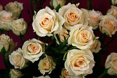 white mikado spray roses