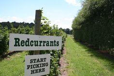 Where to pick fresh fruit and veg near the capital.
