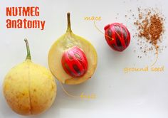Very Interesting! | Spices Unearthed: Nutmeg (and Mace) - The anatomy of a Nutmeg