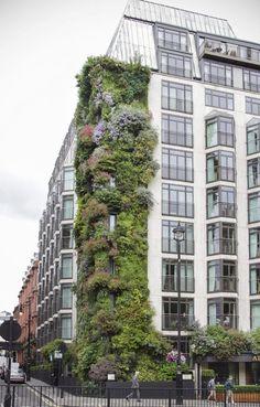 The Atheaeum hotel in Mayfair London Vertical garden by Patrick Blanc - Image by KotomiCreations #verticalvegetablegardenspatrickblanc