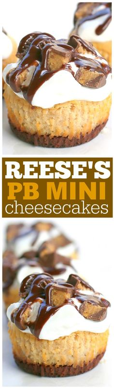 Reese's Peanut Butter Mini Cheesecakes | The Girl Who Ate Everything