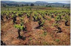 VinumMedia #winelover: La Aristocrática Cepa País!