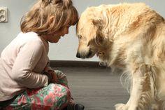 Nie kupuj psa pod choinkę. | MajciaKombinuje.pl - parentingowy blog biznesmamy Dogs, Photos, Animals, Pictures, Animales, Animaux, Pet Dogs, Doggies, Animal
