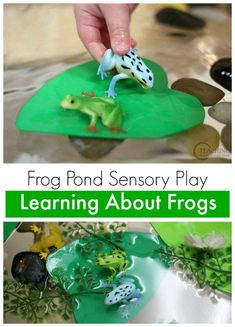This spring sensory bin is a great addition to your frog theme! After learning about the frog life cycle, put together water, rocks, lily pads and frogs for some sensory fun! #spring #sensorybins #frogs #preschool #AGE3 #AGE4