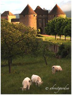 Berzé le Chatel, Bourgogne, Fance