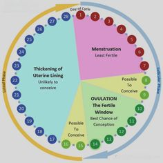 You can check also Menstrual Cycle Ovulation Calendar & Calculator, Fertility Calendar Template. Accurate Ovulation Calculator & Calendar Template in JPG, PNG. Get Pregnant Fast, Trying To Get Pregnant, Getting Pregnant Tips, Pregnant Mom, Ovulatory Cycle, Pregnancy Chart, Pregnancy Calendar, Ovulation Calendar, Fertility Foods