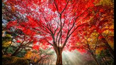 Tiger Tree by Tiger Seo / Beautiful Lights, Beautiful Pictures, Wonderful Picture, Our Body, Tree Of Life, Light Colors, Seo, Scenery, The Incredibles