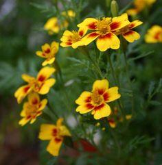 10 kauneinta kesäkukkaa Outdoor Gardens, Outdoor Living, Plants, Outdoor Life, Plant, The Great Outdoors, Outdoors, Planets, Bushcraft