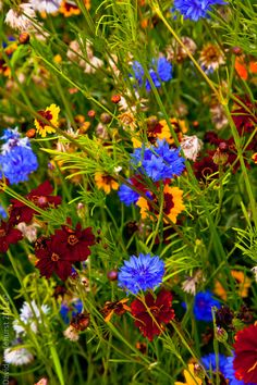 Olympic Wild Flowers 2012 (por David Haslehurst)