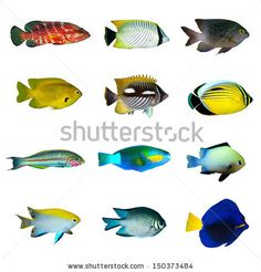 School Of Tropical Fish | Clipart Panda - Free Clipart Images