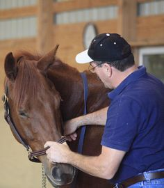 Go Beyond Horse Massage and Change Your Horse's Muscle Memory