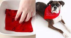 Fabriquez un adorable bandana pour tenir les puces éloignées de votre chien