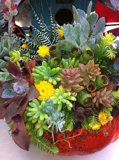 Succulents via succulent fanatics