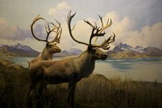 Found this on Flickr - I adore dioramas... I would go to the Museum of Natural History in NYC and stand and stare at the dioramas for hours.