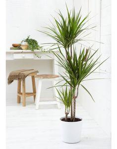 Deze kamerplanten blijven zelfs in het meest donkere huis in leven! - Roomed